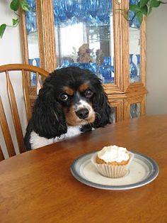 Dog-safe cupcakes
