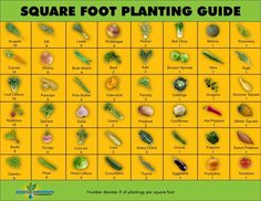 Square Foot Planting Guide... Get BUSY!! :o) - https://www.facebook.com/photo.php?fbid=558568944175402=a.303497426349223.75266.245946198771013=1