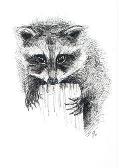 Raccoon pen drawing