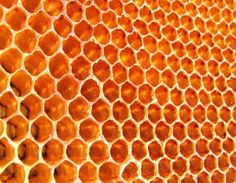 Honey - The Perfect Antibiotic Capable of Solving The Problem of Antibiotic Resistance - Waking Times « Waking Times