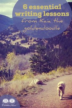 Think you can't learn about writing from a dog? Think again. Here are the 6 lessons my goldendoodle, Kaia, has taught me about how to become a better writer.