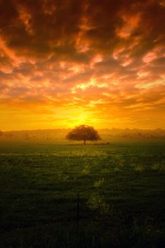 Tree at Sunset! Perfect World Beautiful Sunset, Beautiful World, Simply Beautiful, Terre Nature, Cool Photos, Beautiful Pictures, Amazing Photos, Dame Nature, Nature Sauvage