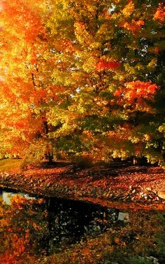 Autumn explosion | Flickr - Photo Sharing!