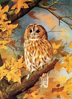 Tawny Owl - 1980 Vintage Bird Print by Basil Ede Owl Bird, Bird Art, Strix Aluco, Graffiti Kunst, Tawny Owl, Owl Wallpaper, Birds Of America, Owl Pictures, Beautiful Owl