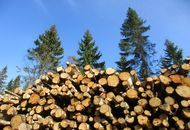 Please address to our team of consultants in company formation in Malaysia for assistance related to the incorporation of a forestry company. Canning, Home Canning, Conservation