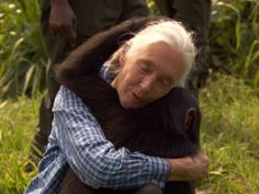 "Jane Goodall..."" It's been 50 years since Jane Goodall walked into the Gombe Forest (with binoculars but no training in science) to study chimpanzees. Today, Goodall is 76 years old, and she's still at it: tolerating camera crews, so she can show the world why chimps are worth saving."