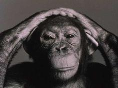 Google Image Result for http://wakeup-world.com/wp-content/uploads/2011/12/chimpanzee-cute.jpg
