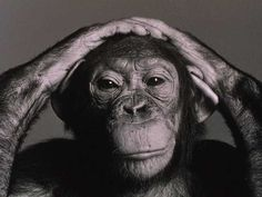 chimpanzee...contemplation?