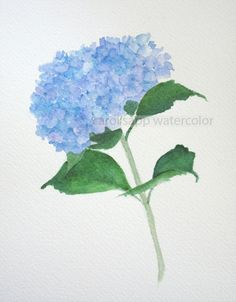 blue hydrangea watercolor flower painting archival print