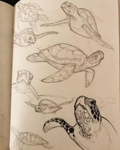 Tieren im Zoo - art - - entertainment - -Zeichnen von Tieren im Zoo - art - - entertainment - - Тату, эскизы. by on Jewel Renee Illustration: Sea Turtle Drawing Ink Drawing ink drawing menina bugada