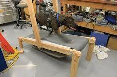 Homemade Dog treadmill