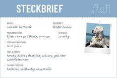 Labrador Retriever Steckbrief | Charakter, Wesen & Haltung Cavalier King Charles Spaniel, Labrador Retriever, Cat Races, Pets, Biology, Labrador Retrievers, Labrador, Labrador Retriever Dog