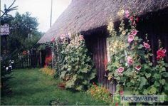 103-suleczyno-stara-chata-kaszubska.jpg (600×381)