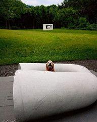 あれっあんな所にタレ目くんが  #sculpture by #KanYasuda  #artepiazza #bibai #photooftheday  #彫刻 #安田侃  #アルテピアッツァ #美唄 #dogs #taro #太郎  #犬 #ゴールデンレトリーバー  #レトリバー #ゴールデン #ふわもこ部 #ゴールデンレトリバー  #dogsofinstagram #ilovemydog #dogoftheday #lovedogs #dogsofinstaworld #mydo