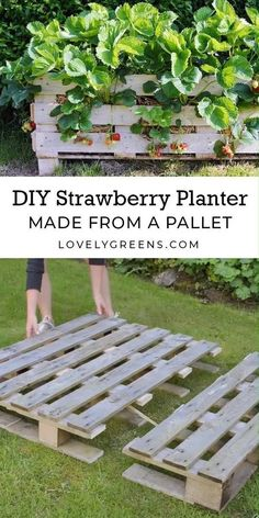 How to build a Strawberry Planter using just a single wood pallet. It takes an afternoon to build and allows you to grow strawberries raised off the ground and on patios Backyard landscaping drought tolerant plants How to make a Strawberry Pallet Planter Garden Yard Ideas, Veg Garden, Vegetable Garden Design, Garden Planters, Lawn And Garden, Vegetable Gardening, Organic Gardening, Garden Hose, Pool Garden