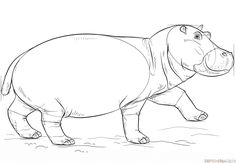 How to draw a hippo step by step. Drawing tutorials for kids and beginners.