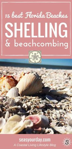 Some of the best beaches for shelling and beachcombing are in Florida. From the Gulf Coast to the East Coast here's a list of 15 best beaches to find a variety of sea shells, sea glass and other treasures. Best Beach In Florida, Destin Beach, Florida Vacation, Florida Travel, Destin Florida, Beach Vacations, Beach Trip, Kissimmee Florida, Hawaii Beach
