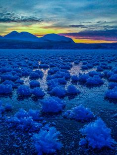 ~~Ice flowers on the frozen Torneträsk ~ Abisko National Park, Sweden by kiljano~~