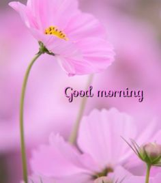 Good Morning Cards, Morning Thoughts, Morning Love, Good Morning Messages, Good Morning Greetings, Good Morning Good Night, Good Morning Wishes, Good Morning Images Flowers, Morning Pictures
