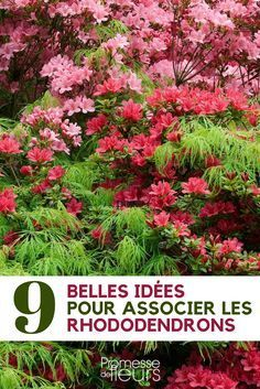#rhododendron #association