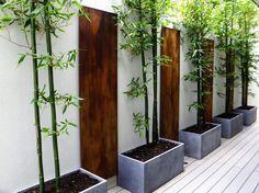 .Visual reference : bamboo / pots