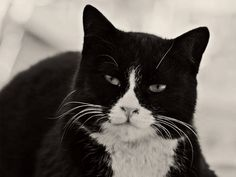 #Caturday(21)