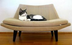 This is Lovey Howl on her very own mini Adrian Pearsall style sofa. Repinned by Secret Design Studio, Melbourne. www.secretdesignstudio.com