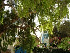 #magiaswiat #podróż #zwiedzanie #targoui #blog #afryka  #tunezja #sousse #sidibousaid #morze #srodmiejskie #statki #medina #suk #katakumby #niebieskiemiasto #monastyr #mauzoleum # fort #medina #port #elkantaoul #flamingi #tunis #kartagina #hergla #meczet Sidi Bou Said, Arch, Outdoor Structures, Garden, Plants, Blog, Sousse, Longbow, Garten