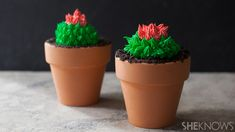 Cactus cupcakes in terra cotta pots