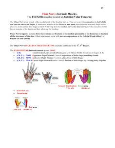 Peripheral Nerve Injuries Study Guide page 17 Hand Therapy, Therapy Tools, Physical Therapy, Therapy Ideas, Peripheral Nerve Injury, Ulnar Nerve, Nbcot Exam Prep, Occupational Therapy Schools, Median Nerve