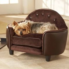 Enchanted Home Pet Plush Brown Headboard Dog Bed ** To view further for this item, visit the image link. (This is an affiliate link and I receive a commission for the sales) Couch Pet Bed, Pet Beds, Doggie Beds, Couch Sofa, Dog Couches, Big Couch, Couch Cushions, Sofa Beds, Sleeper Sofa