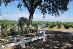 Oak Farm Vineyards Lodi, California I had driven by this rural part of California's Central Valley numerous times but had no idea what a special oasis lay among the old oak trees and huge vineyards around Lodi. After visiting last...  MORE