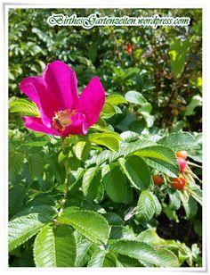 Welche Blumen Blühen Im September spätsommer die schönen seiten im september september blüten und