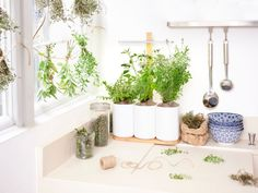 Get The Perfect Herb Garden With These Simple Tips Herb gardening is an excellent way to make sure that your family is getting the best produce that they can. Garden Renovation Ideas, Lots Of Money, Grow Your Own, Herb Garden, Planter Pots, Vogue Paris, Bloom, Herbs, Fatigue