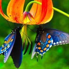 Existen más de 160.000 especies de Mariposas en todo el mundo, que por sus diversos y maravillosos colores y figuras, atrapan nuestra atención y regocijan nuestra mente. Suelen habitar casi todo el planeta, pero siempre prefieren zonas boscosas y cálidas. A la hora de la reproducción, tanto los machos como las hembras se buscan mediante el aleteo y el olfato. Una vez que las mariposas pusieron sus huevos en las plantas, nacerán larvas, a modo de gusanos que reciben el nombre tan conocido de…