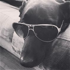 """22 Likes, 2 Comments - Rebecca🍍👑 (@rebecca_bishh) on Instagram: """"You ain't nothin' but a hound dog🎙🎶 #dog #Eli #mypuppy #sunglasses #cooldog #hounddog #cute #Elvis…"""""""