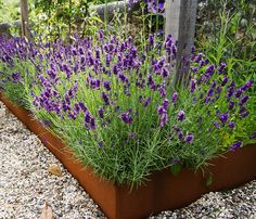 revisit to corten steel vegetable garden in sussex. 1 year on. | arun landscapes