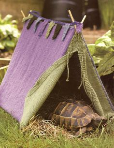 Are you thinking of buying a tortoise to keep? If so there are some important things to consider. Tortoise pet care takes some planning if you want to be. Tortoise House, Tortoise Habitat, Tortoise Table, Turtle Care, Pet Turtle, Turtle Tub, Turtle Aquarium, Outdoor Tortoise Enclosure, Red Footed Tortoise