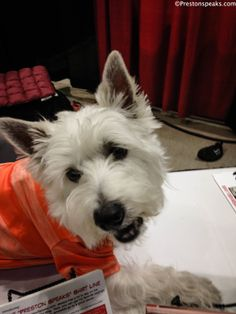 2014 Houston Pet Expo Amazing  Pet Expos Coverage of from their Online Ambassador - Preston from PrestonSpeaks.com. #dog #westie #westhighlandwhiteterrier #amazingpetexpo