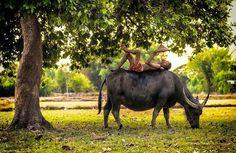 A boy and a buffalo