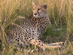 images of African animals | African Animals