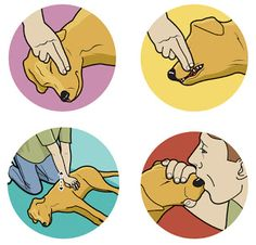 how to resuscitate your dog