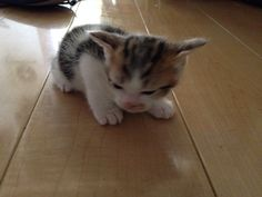 猫を飼ってみて初めてわかったことを挙げるスレ:ハムスター速報