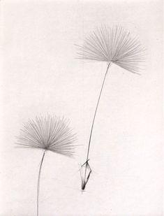 Ellen Edminson: Sammen Wolverhampton, Figurative, Tatting, Dandelion, Flowers, Kunst, Lace Making, Dandelions, Royal Icing Flowers