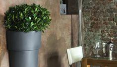 Plant Pots Marcantonio Au Mur 1