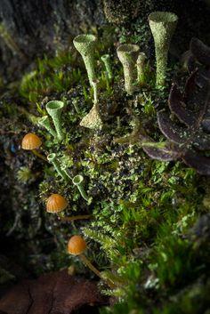 Small landscape : My garden of Eden | Clavaria fimbriata sp.… | Flickr Landscaping Around Trees, Pool Landscaping, Natural Landscaping, Moss Garden, Garden Of Eden, Plant Fungus, Mushroom Fungi, Paludarium, Belleza Natural