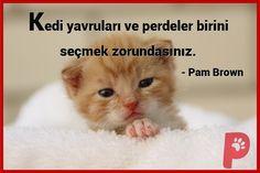 Yavru kedilerin tatlılığı su götürmez bir gerçek... Ya onların perde sevgisi ?... #Yavrukedi #Kedisever #Patiaşkı
