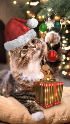 Merry Christmas Message, Merry Christmas Pictures, Merry Christmas Images, Christmas Blessings, Christmas Scenes, Christmas Animals, Christmas Cats, Christmas Greetings, Vintage Christmas