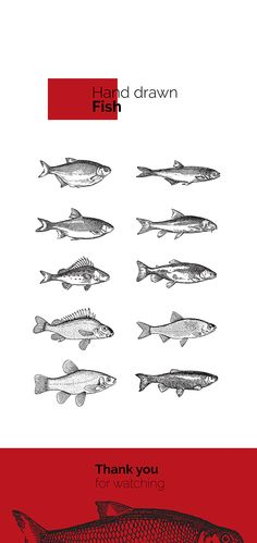 Kami Sushi Bar Branding, #fish #sushi #red Rutger Lanser Twenty Eight