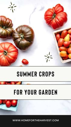 Summer crops are often the most exciting season in the vegetable garden! Whether you're starting a garden of your own or just want to be more informed about which crops and produce are in season, it's good to have an understanding of the types of crops that grow well during the summer. Types Of Peppers, Types Of Tomatoes, Types Of Beans, Green Beans And Tomatoes, Small Tomatoes, Healthy Vegetables, Growing Vegetables, Honeydew Watermelon, Brandywine Tomato